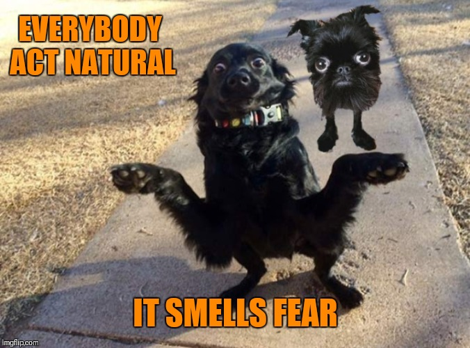 Doggo Week March 10-16 (A Blaze_the_Blaziken and 1forpiece event) |  EVERYBODY ACT NATURAL; IT SMELLS FEAR | image tagged in memes,funny,scared dog,doggo week,44colt | made w/ Imgflip meme maker