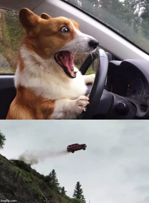 He Didn't Take The Turn Very Well | image tagged in dog driving,dog memes,car crash | made w/ Imgflip meme maker