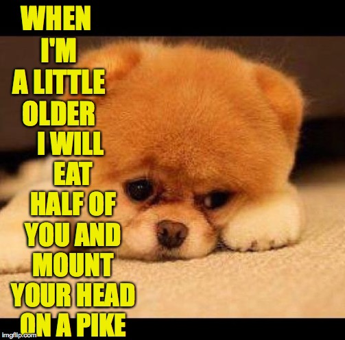 sad dog | WHEN I'M A LITTLE OLDER I WILL EAT HALF OF YOU AND MOUNT YOUR HEAD ON A PIKE | image tagged in sad dog | made w/ Imgflip meme maker