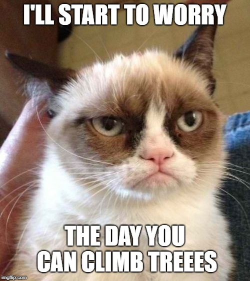 Grumpy Cat Reverse Meme | I'LL START TO WORRY THE DAY YOU CAN CLIMB TREEES | image tagged in memes,grumpy cat reverse,grumpy cat | made w/ Imgflip meme maker