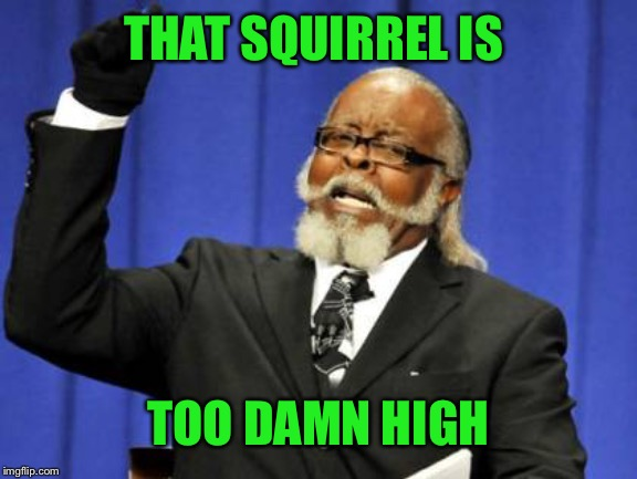 Too Damn High Meme | THAT SQUIRREL IS TOO DAMN HIGH | image tagged in memes,too damn high | made w/ Imgflip meme maker