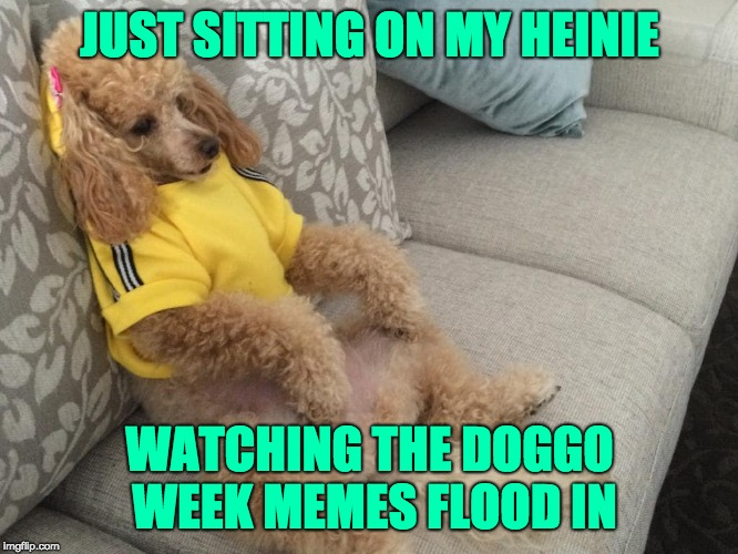 They`re rushing in like a River (Dog Week March 10-16) | JUST SITTING ON MY HEINIE WATCHING THE DOGGO WEEK MEMES FLOOD IN | image tagged in doggo week | made w/ Imgflip meme maker