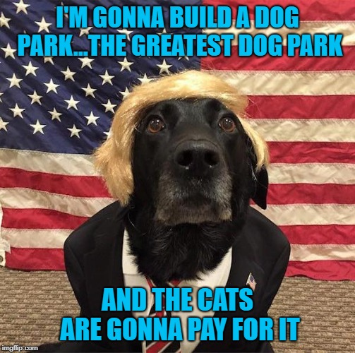 Makin' dogs great again!!! | I'M GONNA BUILD A DOG PARK...THE GREATEST DOG PARK AND THE CATS ARE GONNA PAY FOR IT | image tagged in dog trump,memes,dogs,funny,animals,trump | made w/ Imgflip meme maker