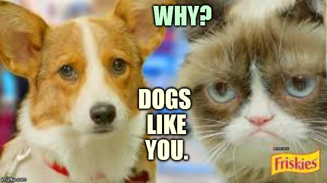 WHY? DOGS LIKE YOU. | made w/ Imgflip meme maker