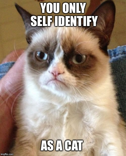 Grumpy Cat Meme | YOU ONLY SELF IDENTIFY AS A CAT | image tagged in memes,grumpy cat | made w/ Imgflip meme maker