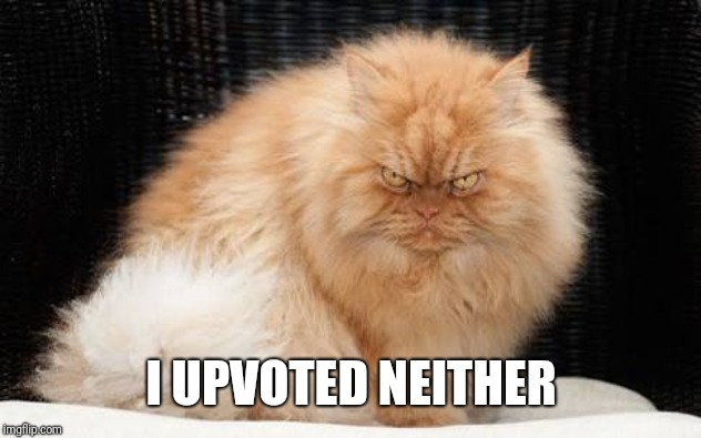 Evil Cats | I UPVOTED NEITHER | image tagged in evil cats | made w/ Imgflip meme maker