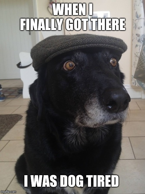 Back In My Day Dog | WHEN I FINALLY GOT THERE I WAS DOG TIRED | image tagged in back in my day dog | made w/ Imgflip meme maker