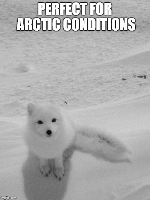 Arctic Foxy Wants... | PERFECT FOR ARCTIC CONDITIONS | image tagged in arctic foxy wants | made w/ Imgflip meme maker