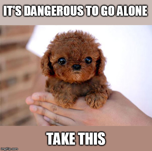 Doggo week | IT'S DANGEROUS TO GO ALONE TAKE THIS | image tagged in doggo week,puppy | made w/ Imgflip meme maker
