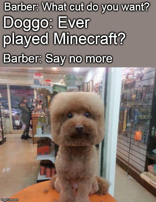 Doggo Week March 10-16 a Blaze_the_Blaziken and 1forpeace Event | Barber: What cut do you want? Barber: Say no more Doggo: Ever played Minecraft? | image tagged in doggo week,haircut,dog,square,minecraft | made w/ Imgflip meme maker
