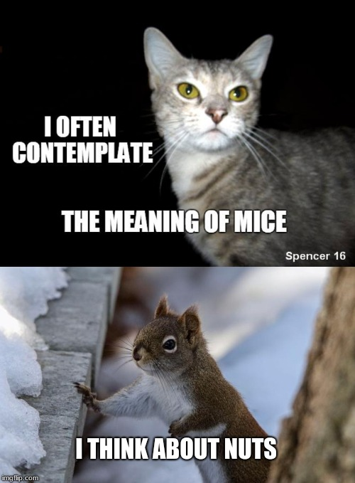 I THINK ABOUT NUTS | image tagged in cats,squirrels,philosophy,nuts | made w/ Imgflip meme maker