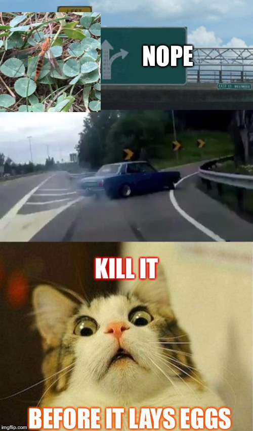 BEFORE IT LAYS EGGS NOPE KILL IT | image tagged in memes,scared cat,left exit 12 off ramp | made w/ Imgflip meme maker