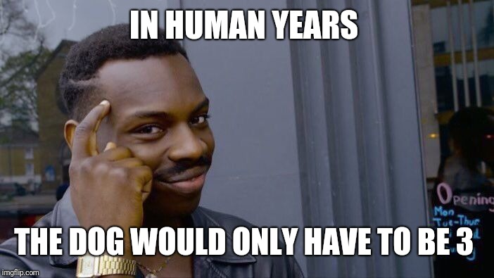 Roll Safe Think About It Meme | IN HUMAN YEARS THE DOG WOULD ONLY HAVE TO BE 3 | image tagged in memes,roll safe think about it | made w/ Imgflip meme maker