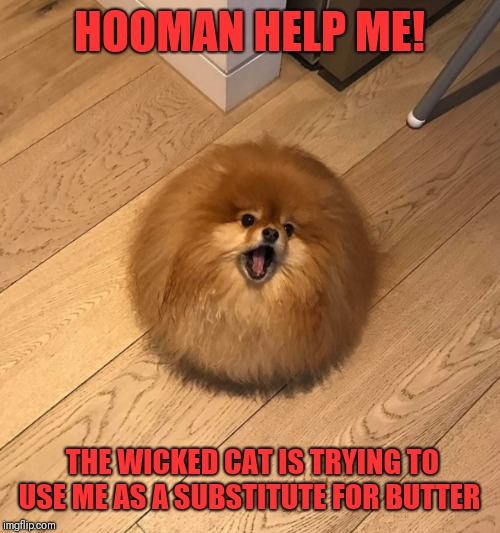 Doggo week March 10-16 a Blaze_The_Blaziken and 1ForcePeace Event | HOOMAN HELP ME! THE WICKED CAT IS TRYING TO USE ME AS A SUBSTITUTE FOR BUTTER | image tagged in dogs,wicked cat,butter,melting | made w/ Imgflip meme maker