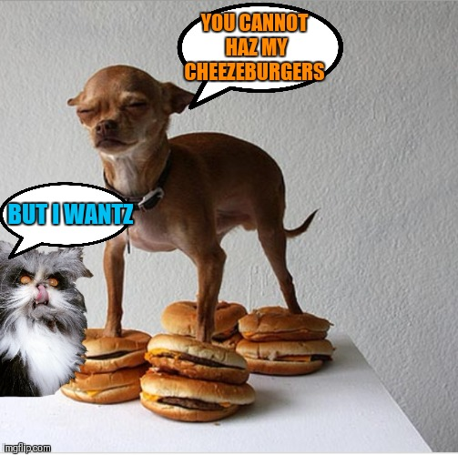 Doggo Week March 10-16 (A Blaze_the_Blaziken and 1forpiece event) | YOU CANNOT HAZ MY CHEEZEBURGERS BUT I WANTZ | image tagged in memes,i can has cheezburger cat,dogs,doggo week,evil cat | made w/ Imgflip meme maker