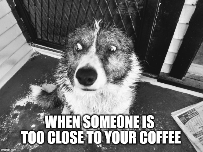 WHEN SOMEONE IS TOO CLOSE TO YOUR COFFEE | image tagged in dog | made w/ Imgflip meme maker