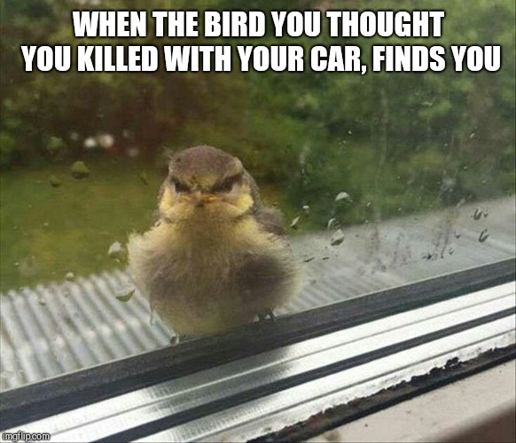 WHEN THE BIRD YOU THOUGHT YOU KILLED WITH YOUR CAR, FINDS YOU | image tagged in angry bird,revenge | made w/ Imgflip meme maker