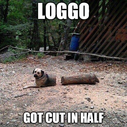 RIP loggo - Doggo week | LOGGO GOT CUT IN HALF | image tagged in doggo week | made w/ Imgflip meme maker