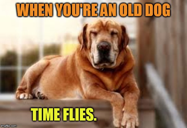 WHEN YOU'RE AN OLD DOG TIME FLIES. | made w/ Imgflip meme maker
