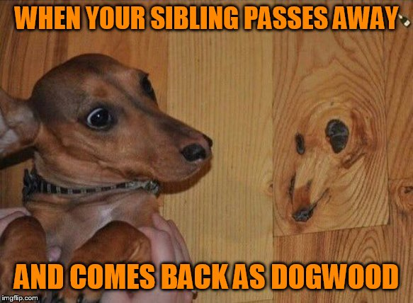 Doggo Week March 10-16 a Blaze_the_Blaziken and 1forpeace Event) | WHEN YOUR SIBLING PASSES AWAY AND COMES BACK AS DOGWOOD | image tagged in dogwood,doggo week,spirit,dog,ghost,siblings | made w/ Imgflip meme maker