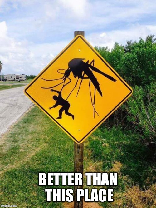 mosquito | BETTER THAN THIS PLACE | image tagged in mosquito | made w/ Imgflip meme maker
