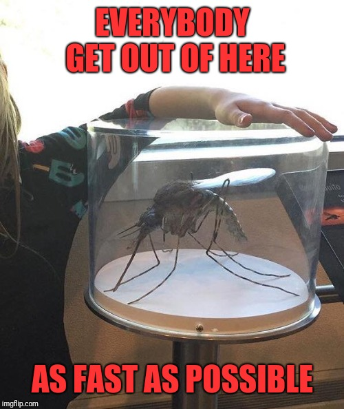 Alaskan Mosquito | EVERYBODY GET OUT OF HERE AS FAST AS POSSIBLE | image tagged in alaskan mosquito | made w/ Imgflip meme maker