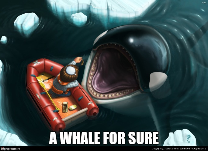 Killer Whale | A WHALE FOR SURE | image tagged in killer whale | made w/ Imgflip meme maker
