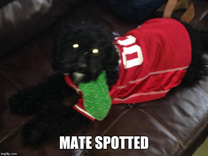 MATE SPOTTED | made w/ Imgflip meme maker
