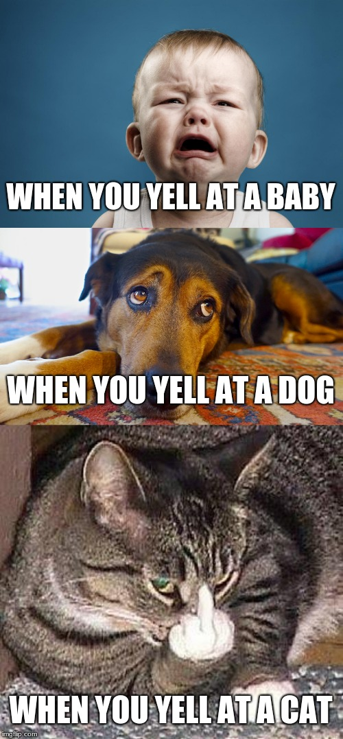 Babies v. Dogs v. Cats | WHEN YOU YELL AT A BABY WHEN YOU YELL AT A DOG WHEN YOU YELL AT A CAT | image tagged in babies,dogs,cats,memes,nsfw,middle finger | made w/ Imgflip meme maker