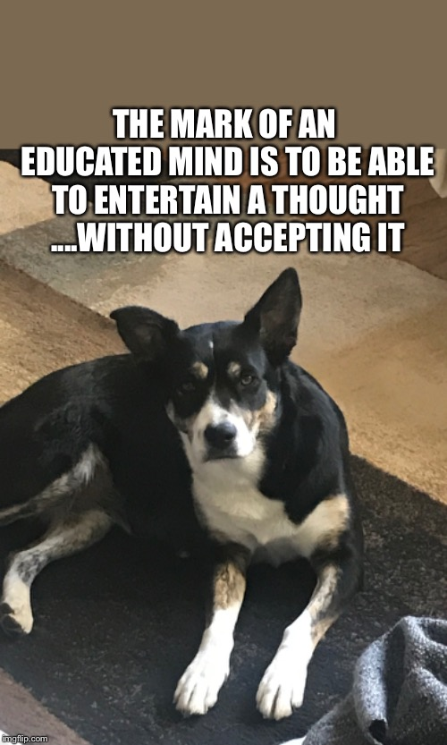 THE MARK OF AN EDUCATED MIND IS TO BE ABLE TO ENTERTAIN A THOUGHT ....WITHOUT ACCEPTING IT | image tagged in border collie | made w/ Imgflip meme maker