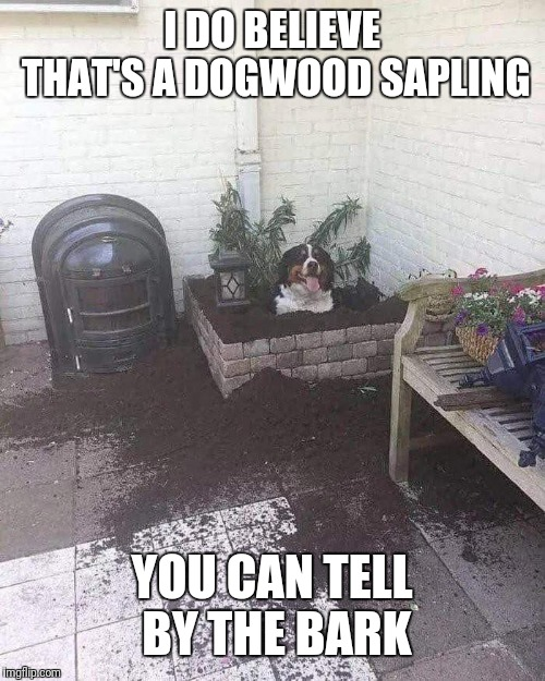 Doggo Week!  | I DO BELIEVE THAT'S A DOGWOOD SAPLING YOU CAN TELL BY THE BARK | image tagged in doggo week,1forpeace,blaze the blaziken | made w/ Imgflip meme maker