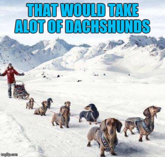THAT WOULD TAKE ALOT OF DACHSHUNDS | made w/ Imgflip meme maker