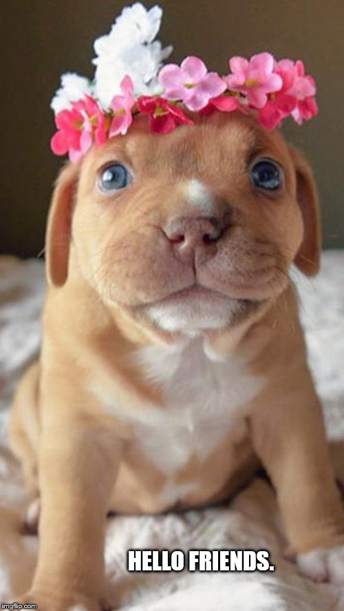 If you're having a bad day, here's a puppy with a flower crown. |  HELLO FRIENDS. | image tagged in puppy,cute,wholesome,doggo week,pupper,doggo | made w/ Imgflip meme maker
