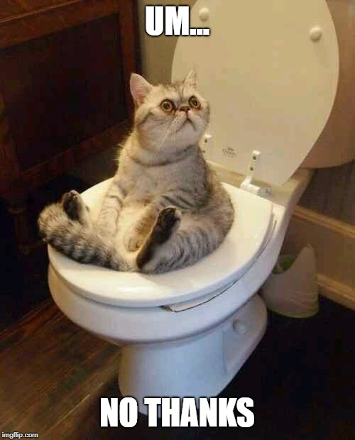 Toilet cat | UM... NO THANKS | image tagged in toilet cat | made w/ Imgflip meme maker