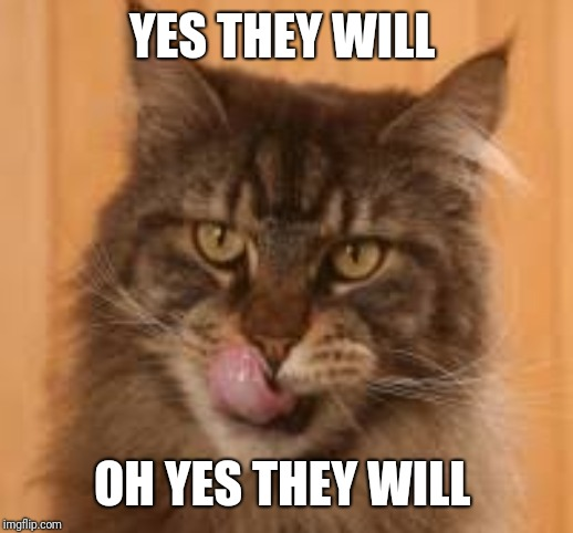 Hungry cat | YES THEY WILL OH YES THEY WILL | image tagged in hungry cat | made w/ Imgflip meme maker