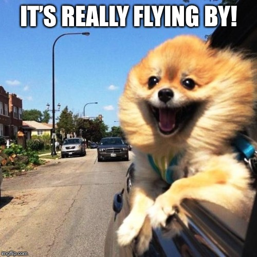 happy dog | IT'S REALLY FLYING BY! | image tagged in happy dog | made w/ Imgflip meme maker