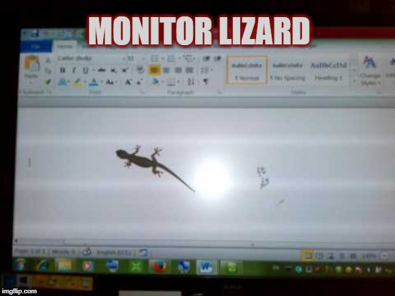 That Monitor Must Be HUUUGE! | MONITOR LIZARD | image tagged in reptile,lizard,funny animals,computer monitor | made w/ Imgflip meme maker