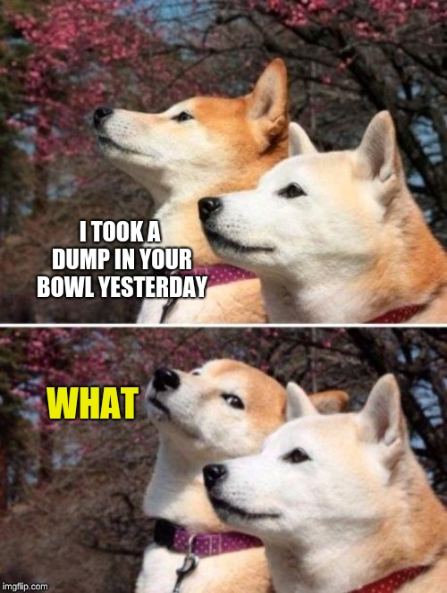 Last submission for Doggo Week March 10-16 a Blaze_the_Blaziken and 1forpeace Event | I TOOK A DUMP IN YOUR BOWL YESTERDAY WHAT | image tagged in shiba bad joke,memes,1forpeace,blaze the blaziken,doggo week | made w/ Imgflip meme maker