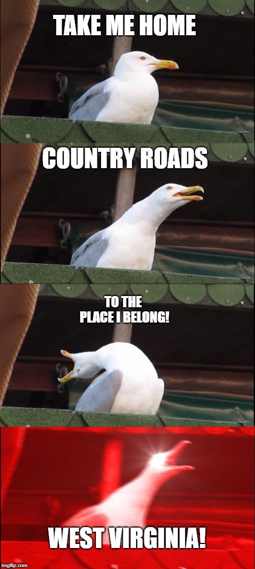Inhaling Seagull Meme | TAKE ME HOME COUNTRY ROADS TO THE PLACE I BELONG! WEST VIRGINIA! | image tagged in memes,inhaling seagull | made w/ Imgflip meme maker