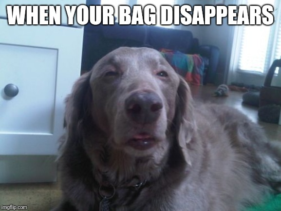 Doggo Week March 10-16 a Blaze_the_Blaziken and 1forpeace Event | WHEN YOUR BAG DISAPPEARS | image tagged in memes,high dog | made w/ Imgflip meme maker