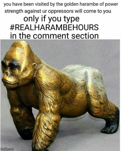 Golden Harambe Of Power | image tagged in harambe,realharambehours | made w/ Imgflip meme maker