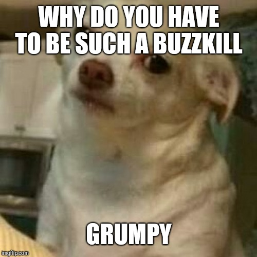 Disappointed Doggo | WHY DO YOU HAVE TO BE SUCH A BUZZKILL GRUMPY | image tagged in disappointed doggo | made w/ Imgflip meme maker