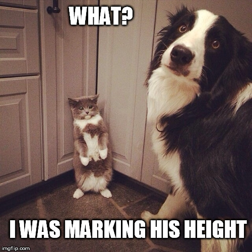 Backed into a corner |  WHAT? I WAS MARKING HIS HEIGHT | image tagged in doggo week,growth,chart,dog vs cat | made w/ Imgflip meme maker