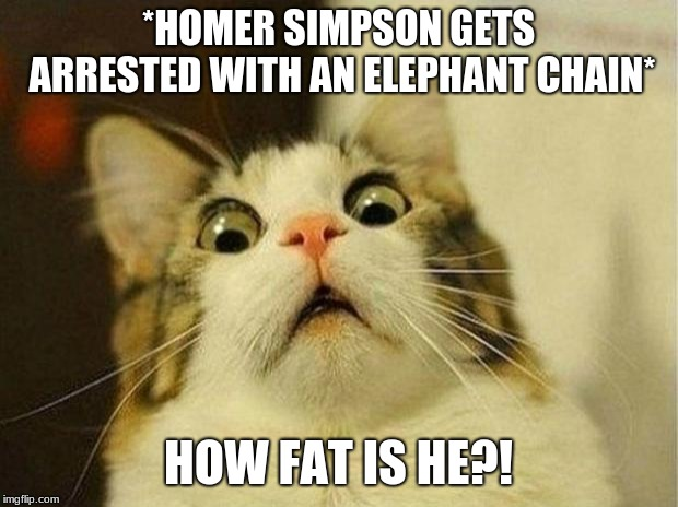 Scared Cat Meme | *HOMER SIMPSON GETS ARRESTED WITH AN ELEPHANT CHAIN* HOW FAT IS HE?! | image tagged in memes,scared cat | made w/ Imgflip meme maker