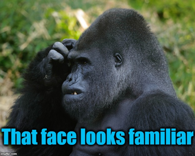 Gorilla Scratching Head | That face looks familiar | image tagged in gorilla scratching head | made w/ Imgflip meme maker