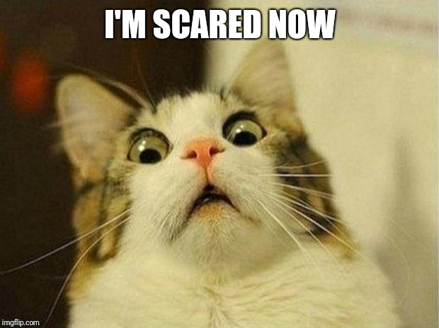 Scared Cat Meme | I'M SCARED NOW | image tagged in memes,scared cat | made w/ Imgflip meme maker