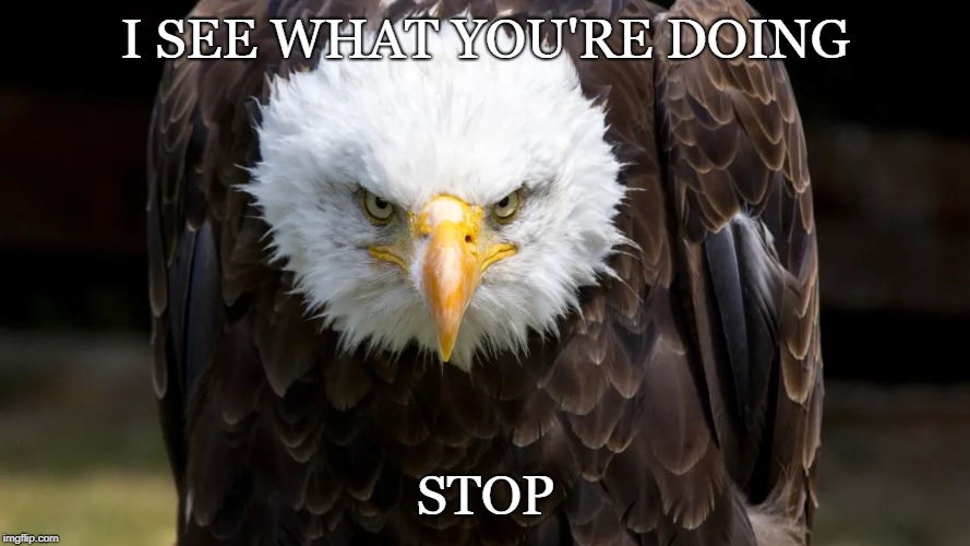 Angry Eagle |  I SEE WHAT YOU'RE DOING; STOP | image tagged in angry,disappointment,stare dad | made w/ Imgflip meme maker