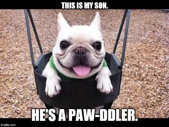 This is my son. | THIS IS MY SON. HE'S A PAW-DDLER. | image tagged in puppy,cute,meme,pupper,doggo,doggo week | made w/ Imgflip meme maker