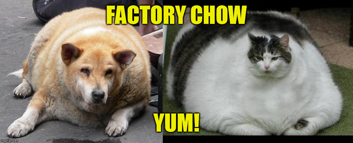 FACTORY CHOW YUM! | image tagged in fat cat 2,fat dog | made w/ Imgflip meme maker