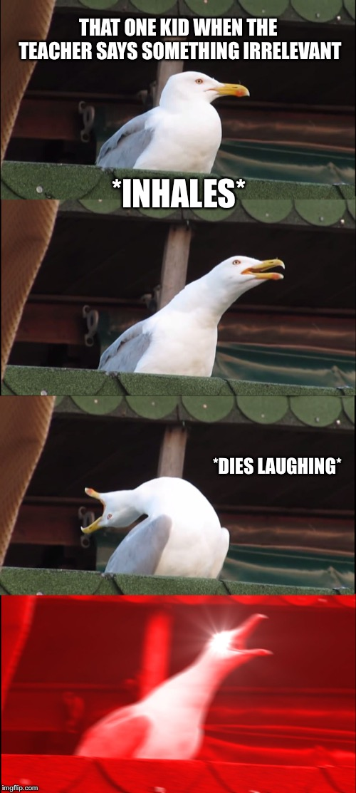 Inhaling Seagull Meme | THAT ONE KID WHEN THE TEACHER SAYS SOMETHING IRRELEVANT *INHALES* *DIES LAUGHING* | image tagged in memes,inhaling seagull | made w/ Imgflip meme maker